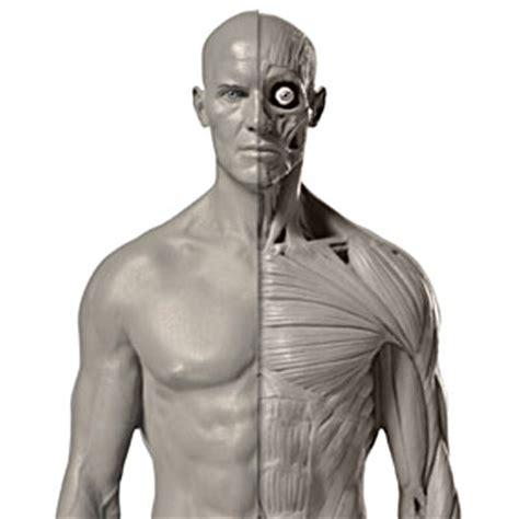 zbrush anatomy tutorial pixologic zbrush blog 187 mastering human anatomy in zbrush