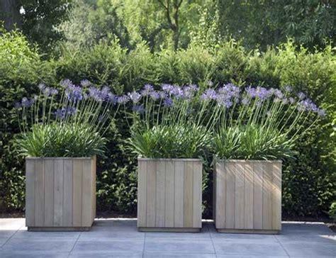 interieur beplanting in engels agapanthus afrikaanse lelie in houten bak idee 235 n voor