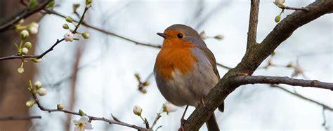 uccelli non volanti uccelli canori passeriformi e corvidi animali volanti