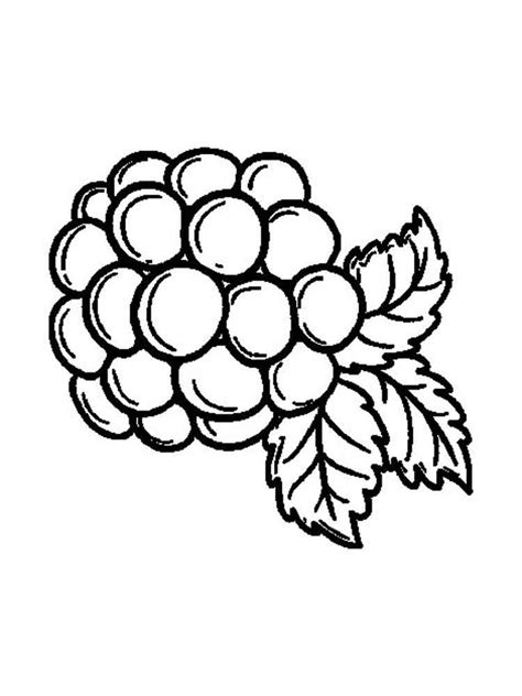 blackberry coloring pages download and print blackberry