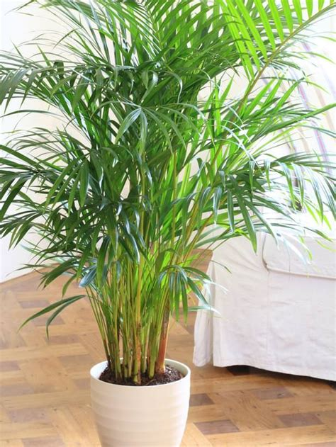 plants that grow in low light 25 best ideas about indoor plants low light on pinterest