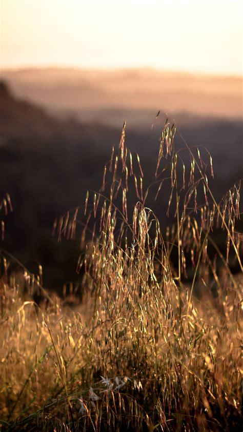 wallpaper california  hd wallpaper  field sunset