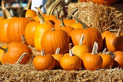 pumpkin patches pumpkin patch 171 gentlezoo