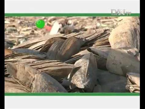 Kerang Simping limbah cangkang kerang simping m4v