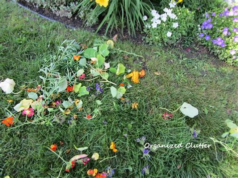 Dead Heading deadheading the and bane of a flower garden