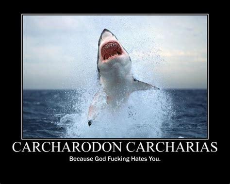 Great Funny Memes - great white shark meme memes