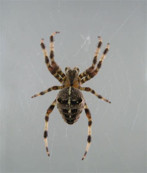 Garden Spider Uk Spiders Wildlife In The Garden Homes For Wildlife