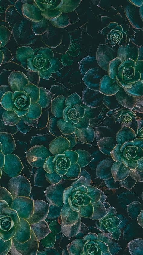 background iphone green succulents wallpapers backgrounds