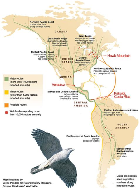 where s everybody going migration patterns and housing 6ahawkmountain11 migration