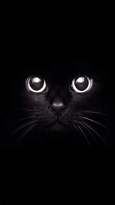 black cat wallpaper iphone cat in the dark wallpaper free iphone wallpapers