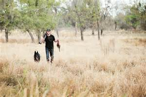 how to a to pheasant hunt pheasant tips with german shepherd