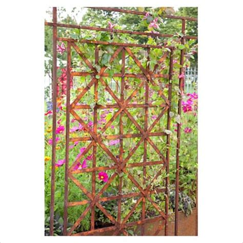 Decorative Plant Trellis Gap Photos Garden Plant Picture Library Closeup Of