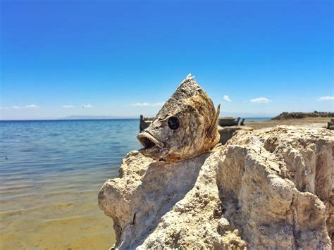 Costa Del Mar Boat Giveaway - exploring the bombay beach ruins at the salton sea oc