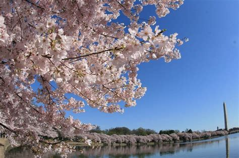cherry tree 10 miler top 10 reasons i running in the washington dc area dc rainmaker