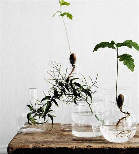 indoor water air garden  joy  plants