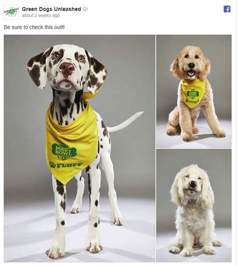 green dogs unleashed green dogs unleashed puppies battle it out in the puppy bowl green dogs unleashed