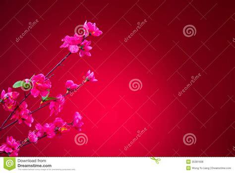 new year cherry blossom background cherry blossom during new year with background