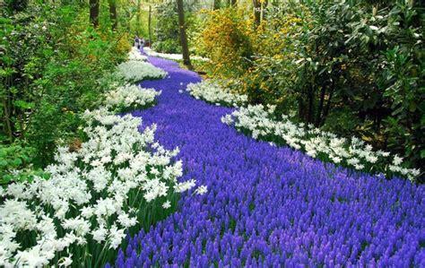 world largest flower garden world s largest flower garden keukenhof netherlands