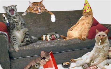 imagenes graciosas de animales borrachos fiesta de gatos gatos chistosos imagenes chistosas
