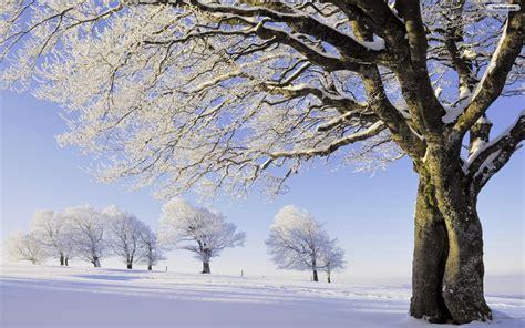 winter tree winter tree wallpaper wallpapersafari