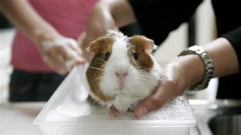 test su animali test su animali test sugli animali proroga di 3 anni terra