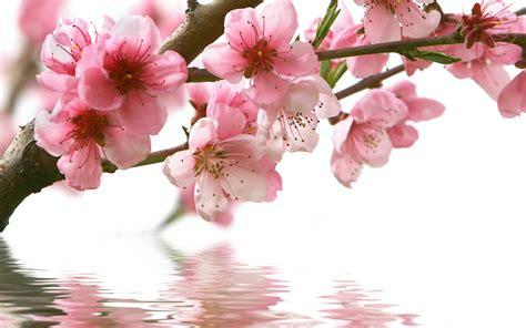 flower spring spring flowers fotolip com rich image and wallpaper