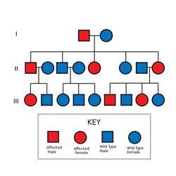 Colour Blindness Pedigree Chart Error Student Doctor Network