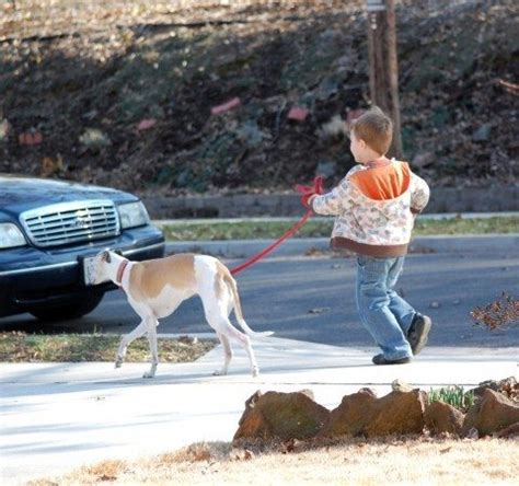 how to your not to pull when walking how to your to walk on a leash without pulling times guide to dogs