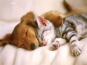puppy wallpaper puppies and kittens wallpapers wallpaper cave
