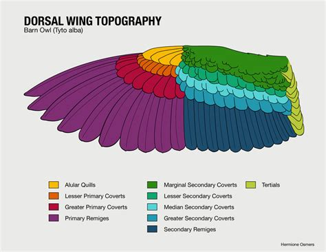 wing diagram in the wings sphere inc