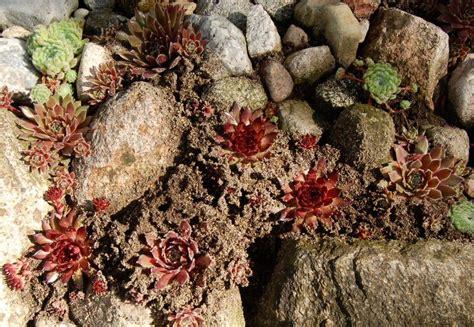 matratzen concord trier was gegen ameisen im garten 28 images gegen ameisen