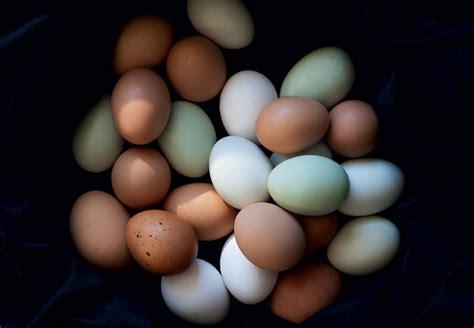 Fresh Eggs Shelf Unrefrigerated by How To Raise Chickens For Farm Fresh Eggs Modern Farmer