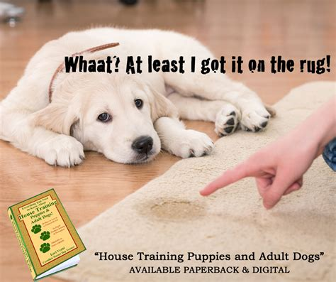 house breaking an older dog withholding a difficult housebreaking problem lori verni fogarsi loritheauthor