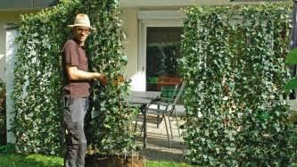 windschutz für terrasse pflegeleichte hecke garten speyeder net verschiedene