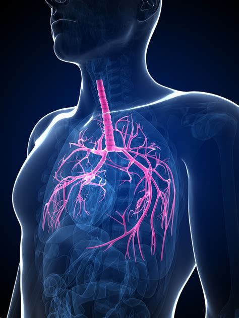 Glycopyrrolate Also Search For Copd Focused Aerobika Device May Help With Bronchiectasis