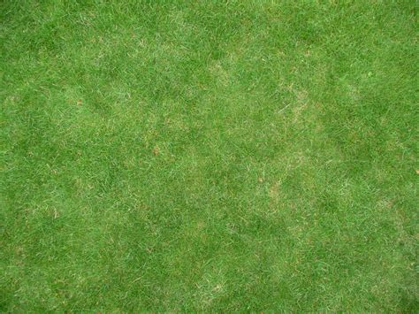 grass texture grass texture leo oosterloo flickr