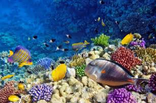 Popular Locations to Go Diving in Mexico