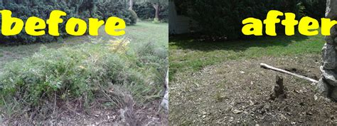 the best 28 images of backyard cleanup services backyard