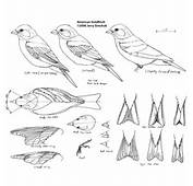 The Birds Wood Carvings And Ojays On Pinterest