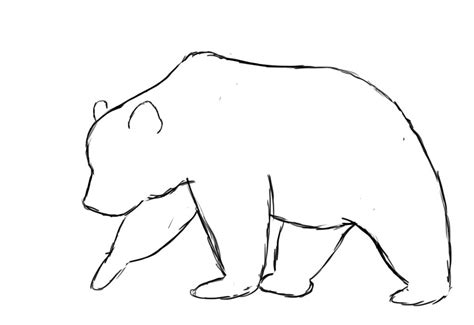 bear outline tattoo how to draw a outline drawings outlines and bears