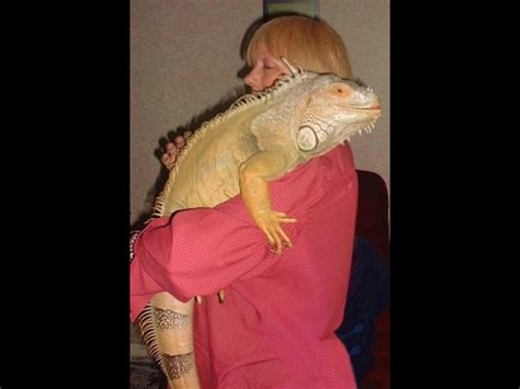 top  exotic pets    buy   youtube