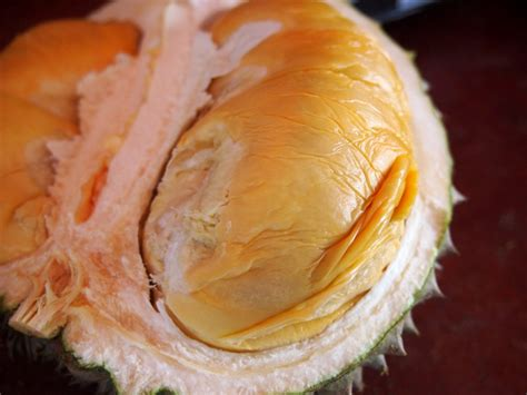black thorn durian story year   durian
