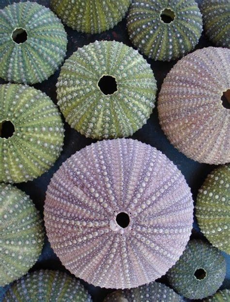 patterns in nature exam pin by maria lebetskaya on clrs pinterest