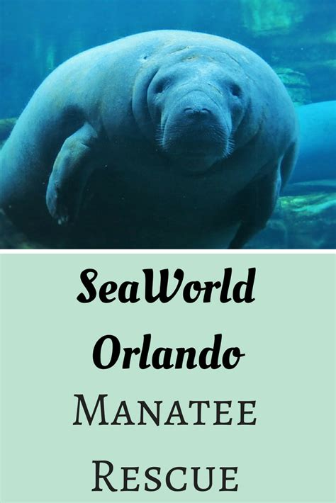 orlando adoption seaworld orlando manatee rescue