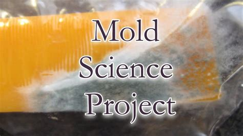 mold st grade science project youtube