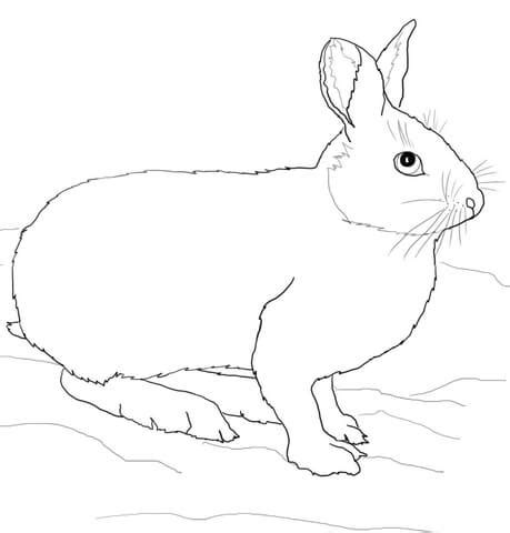 arctic hare coloring coloring pages