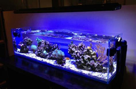 Aquascaping Tank 12gallon Mr Aqua Tank Rimless Aquascaping Aquarium