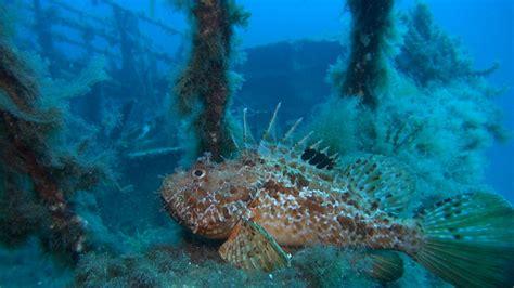 gozo dive gozo diving 166 mv karwela wreck