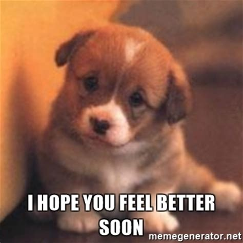 feel better puppy feel better meme memes