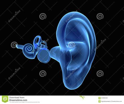 anatomie humaine de l oreille 3d illustration stock